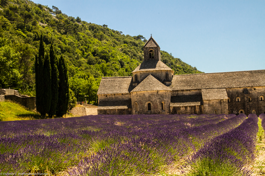 A Summer in Provence-7365
